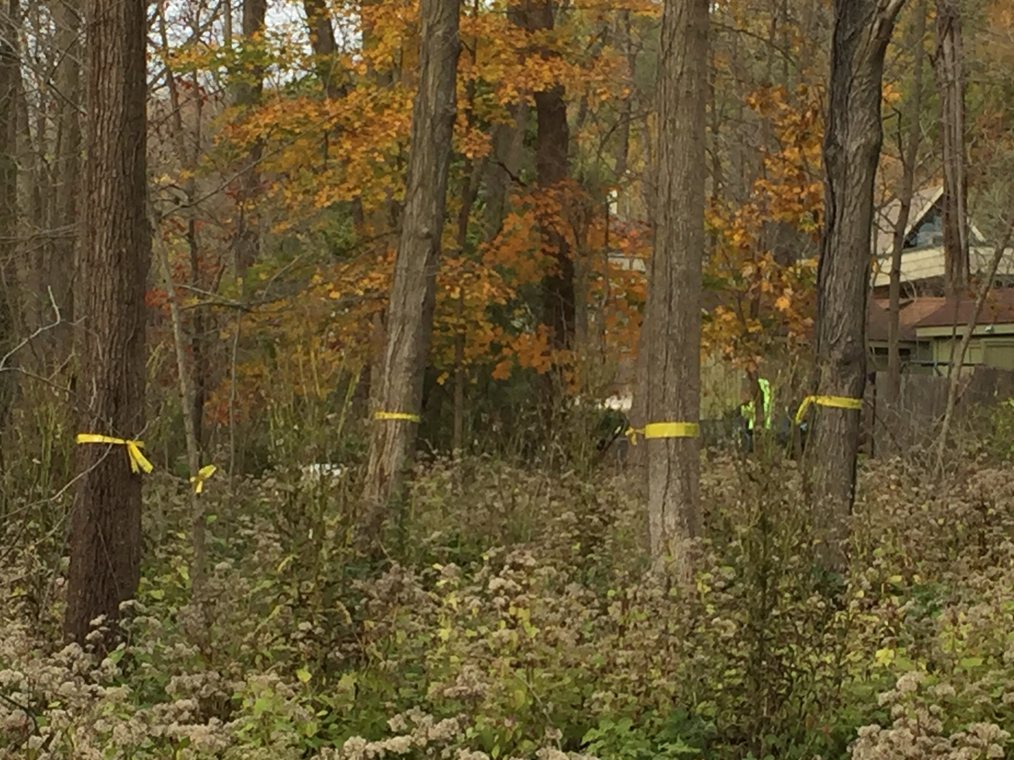 Mature hardwood trees at Wehr Nature Center unintentionally killed by misuse of herbicide in 2017 are marked for logging this winter.