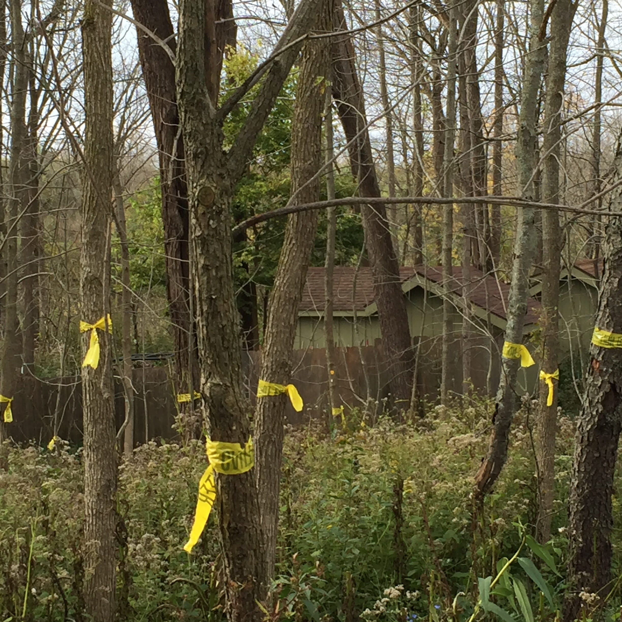 More than 300 hardwood trees at Wehr Nature Center unintentionally killed by herbicide