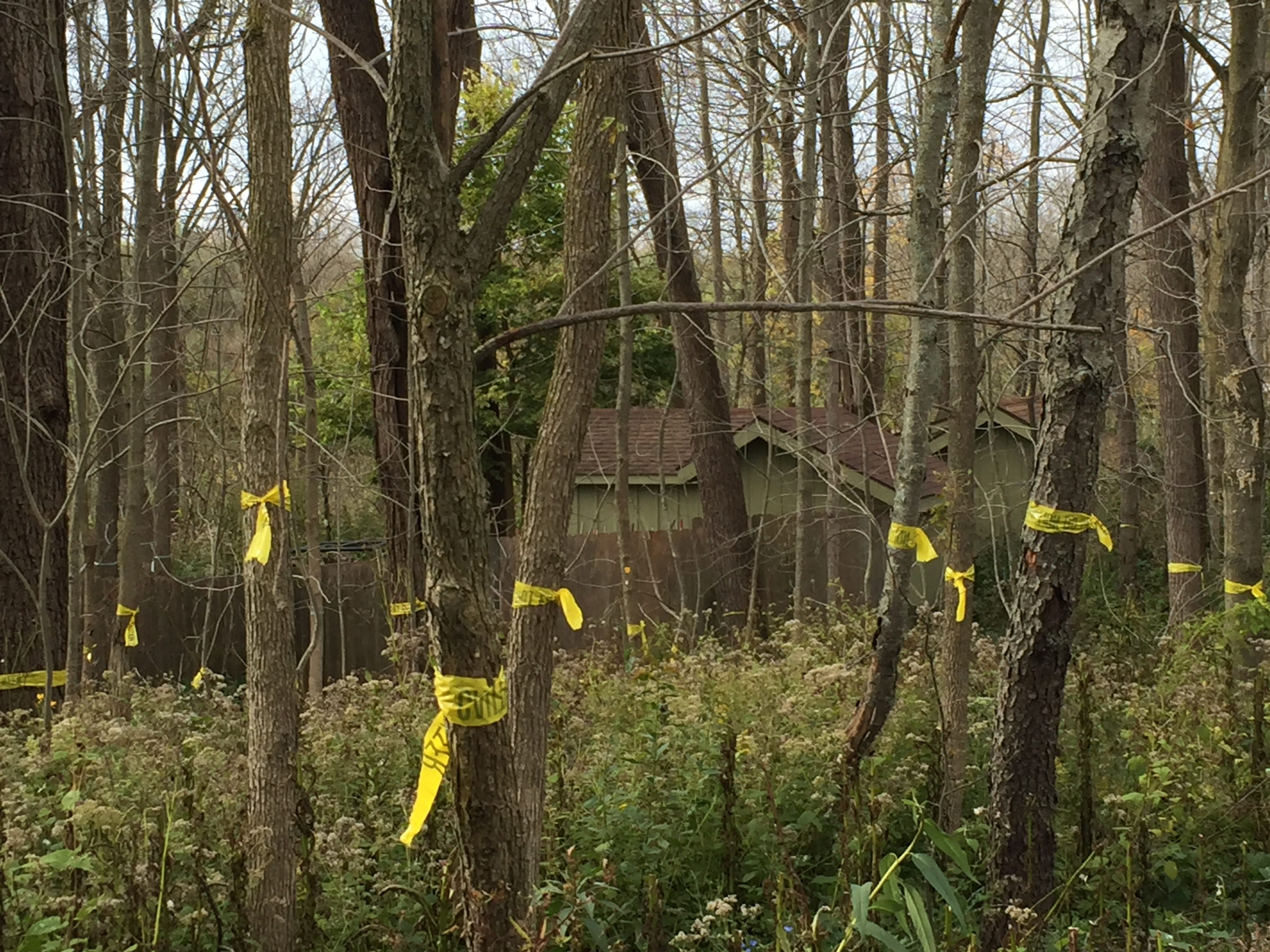 Dead hardwood trees at Wehr Nature Center are marked for logging this winter.