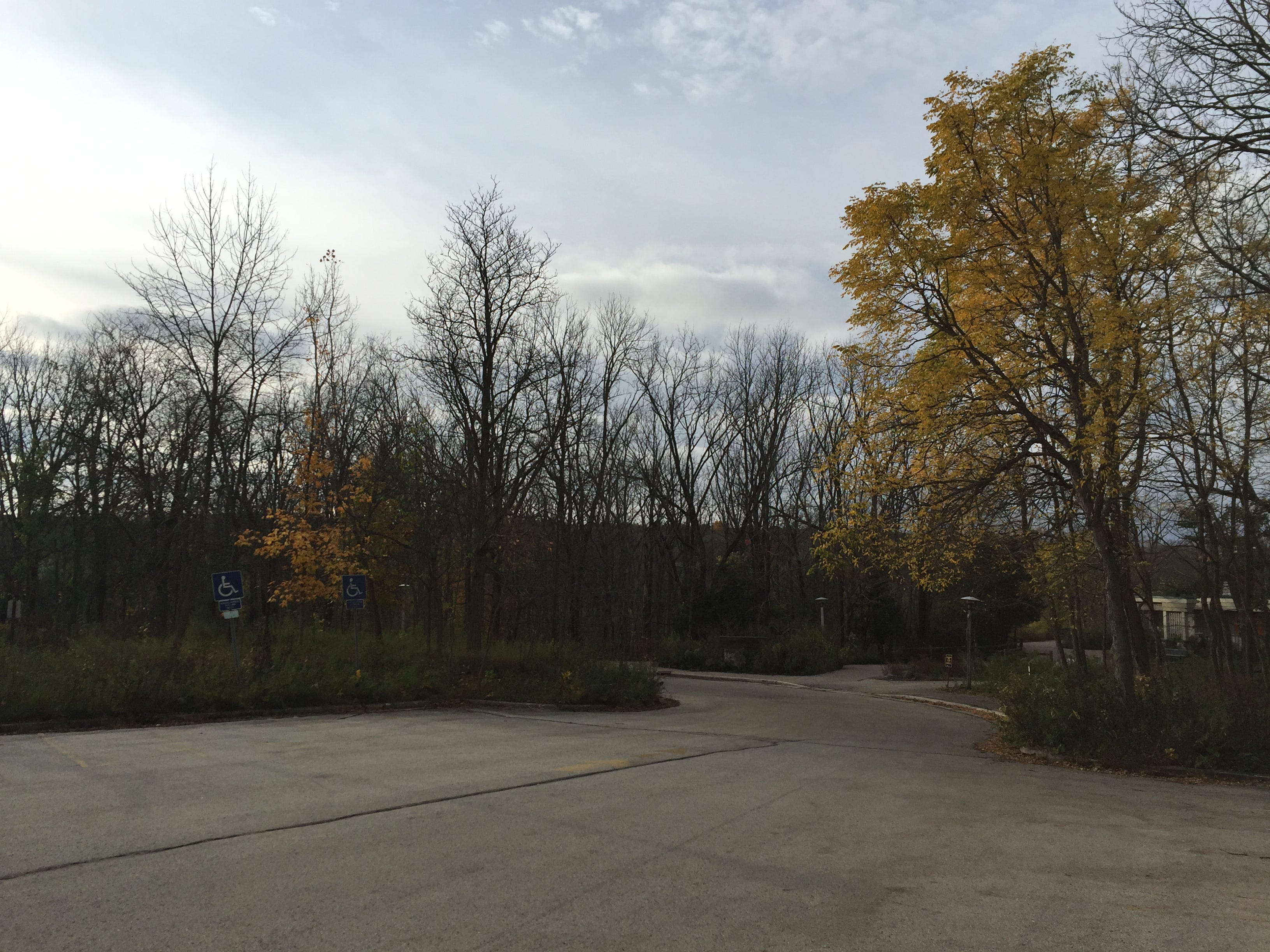 A canopy of dead hardwood trees unintentionally killed by herbicide are visible from the visitor parking lot at Wehr Nature Center.
