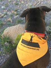 A dog sports a bandana offered through the Soroptimist Challenge.