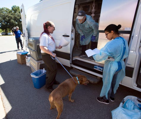 Escambia County Animal Shelter Hurricane Relief