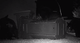 Trail cam footage shows three bears wrestling around with trash cans - and each other - on Thursday night at a Navarre residency.