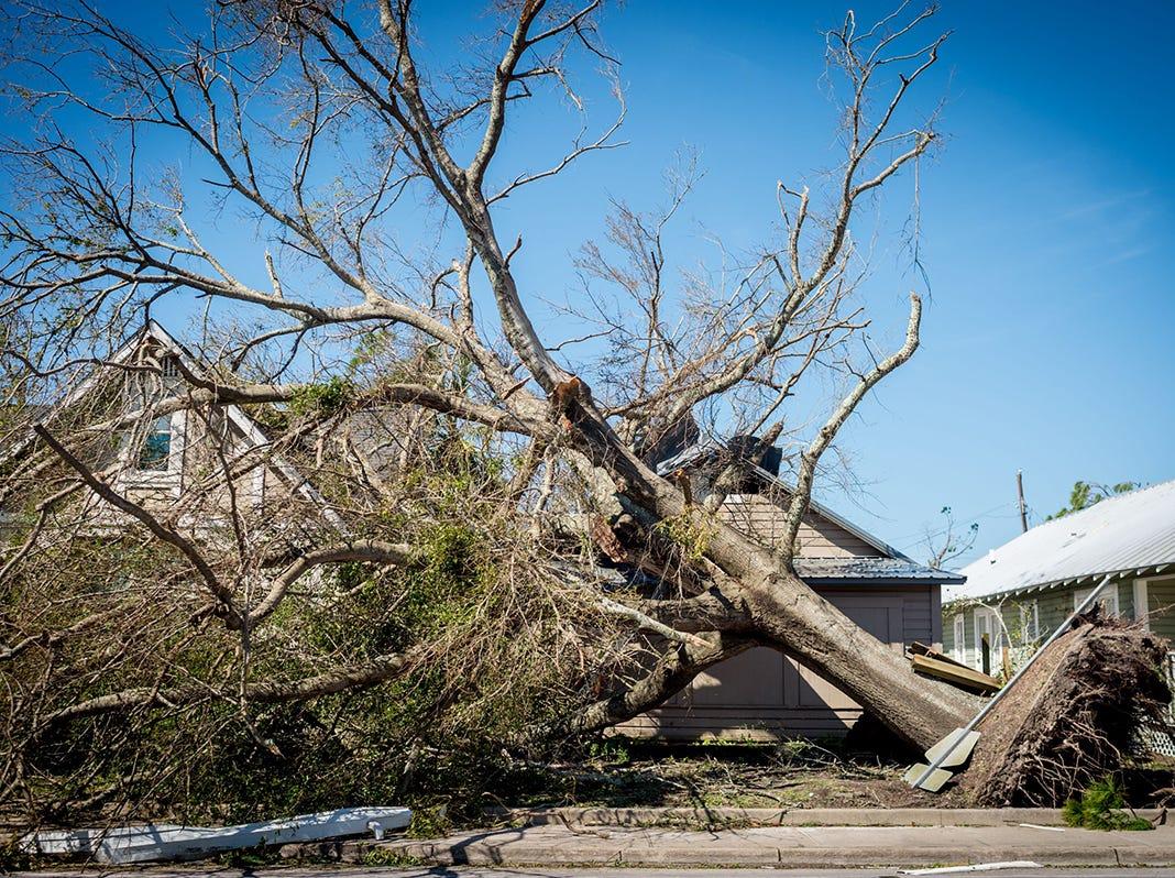 Un árbol caído se ve frente a una casa en la ciudad de Panamá, Florida, después del huracán Michael, el 11 de octubre de 2018. - Los residentes de Florida Panhandle se despertaron a las escenas de devastación el jueves después de que Michael abriera un camino a través de la región costera como un poderoso huracán que mató al menos a dos personas.