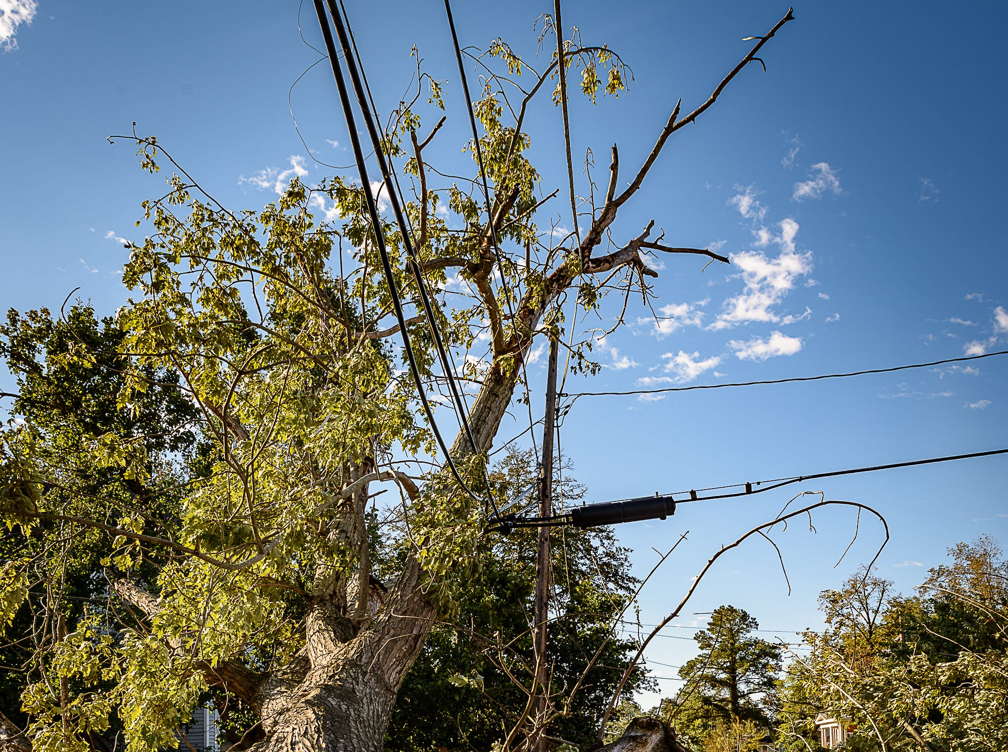 A downed tree balances precariously on a power line in Cape Charles, Virginia after a storm on Oct. 12, 2018.