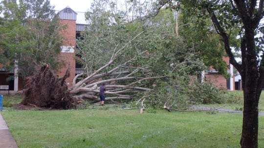 Image of a fallen tree on the campus of Tallahassee Community College.
