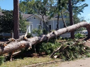 A huge pine tree toppled away from a home off King Street.