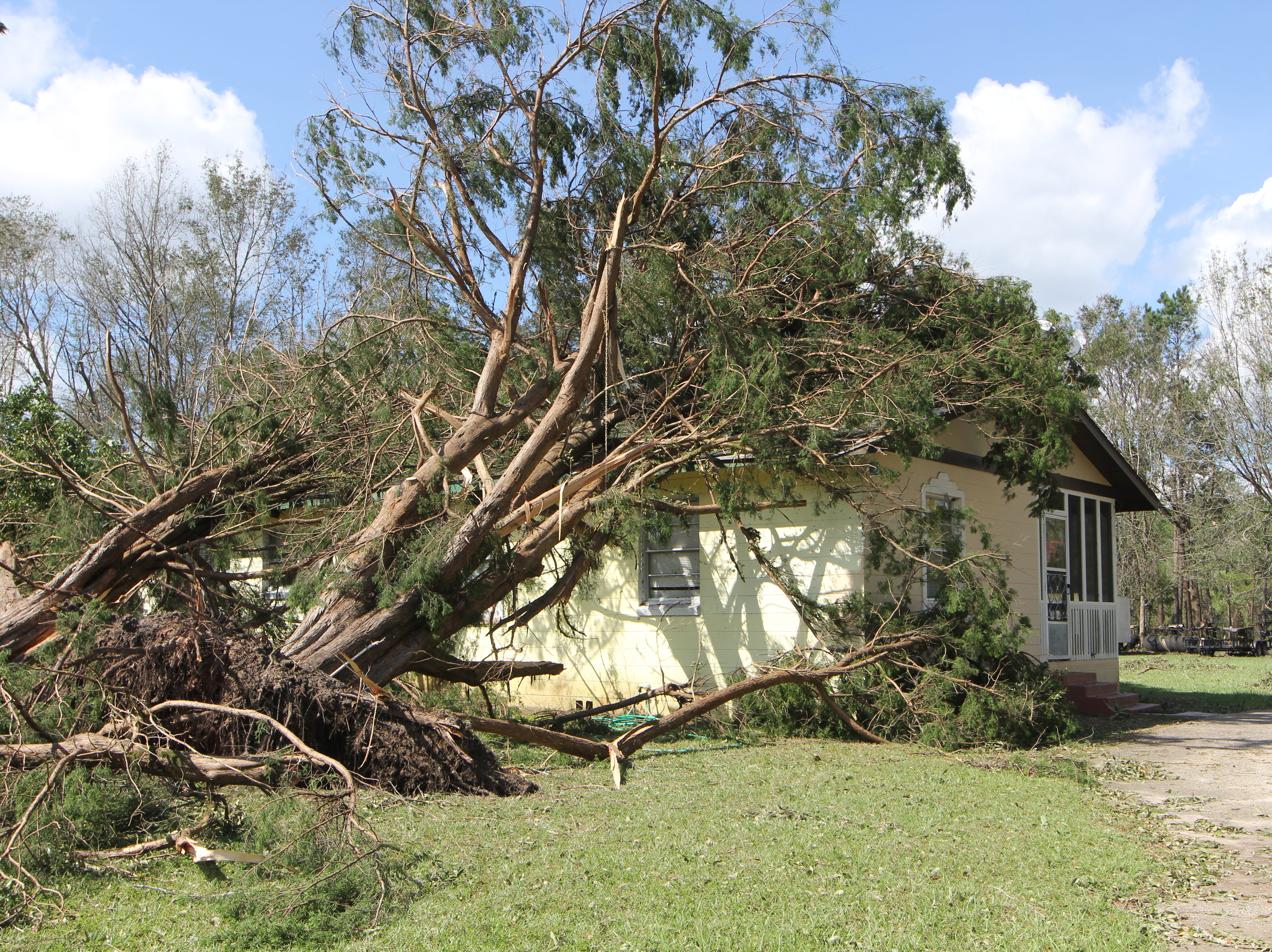Trees fell on a home in Sawdust, Gadsden County, pictured Thursday, Oct. 11, 2018, following Hurricane Michael.