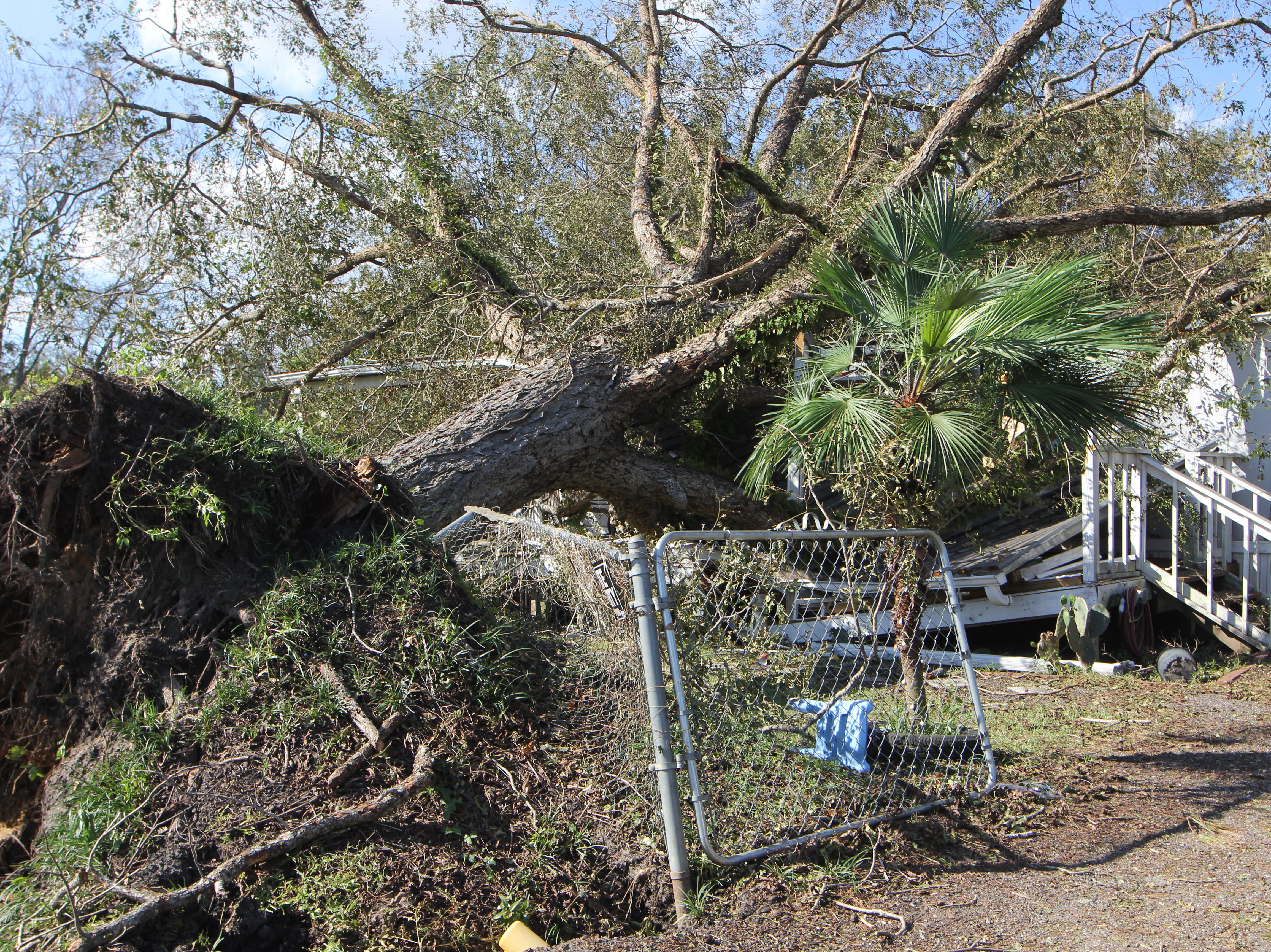 A large tree uprooted by Hurricane Michael smashes through a trailer home in Gadsden County.