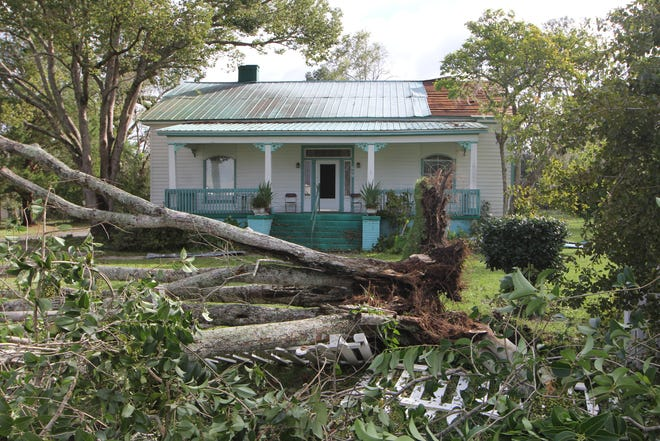 A tree uprooted from Hurricane Michael in front of Davenport Home Child Care in Quincy's Shelfer Heights Thursday, Oct. 11, 2018.