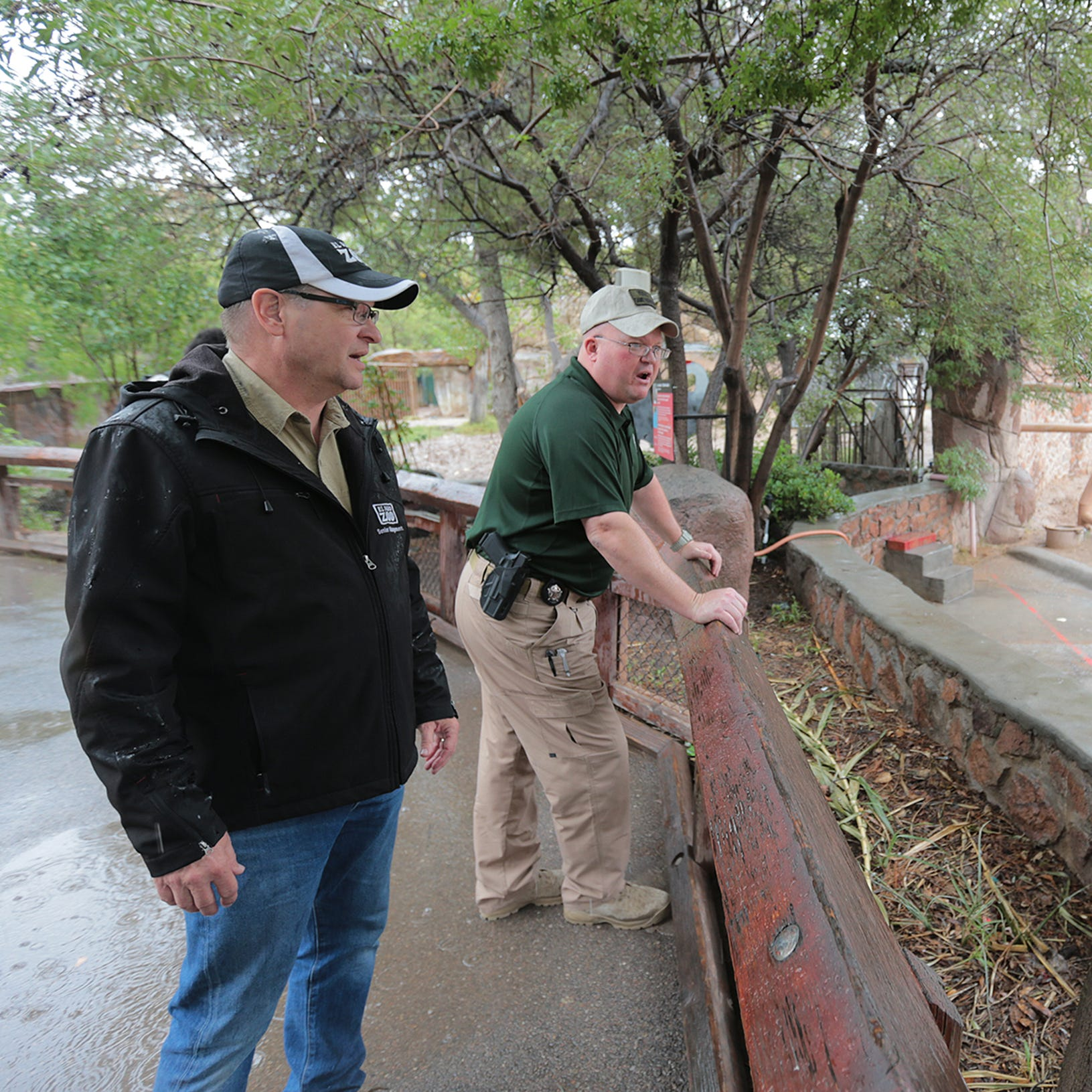 Wild mountain lion sighting closes El Paso Zoo for a day