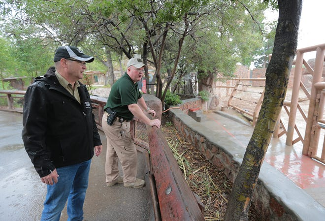 Zoo Director Steve Marshall, left, and Game Warden Ray Spears show where a night security guard saw a mountain lion in the elephant enclosure at the El Paso Zoo. After a five-hour search by zoo officials, game wardens and El Paso police, no mountain lion was located on the zoo grounds.