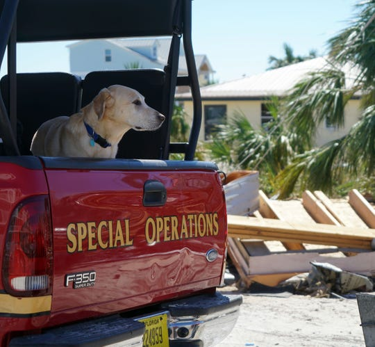 Rit, a yellow Lab and urban search-and-resuce task force member, surveys the damage in Mexico Beach on Oct. 12, 2018, following the passage of Hurricane Michael.