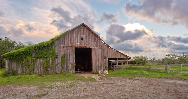 The rustic original barn houses the resident miniature donkeys which can remain with the nearly 6 acre property.