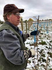 Dean Hatch shows how a grape vine will be trained to grow along wire at a vineyard near Wadsworth Pond on the western edge of Great Falls.