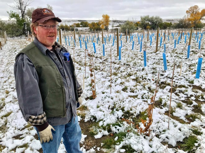 Dean Hatch poses in a vineyard he and Tim Wilkinson have established near Wadsworth Pond on the western edge of Great Falls.