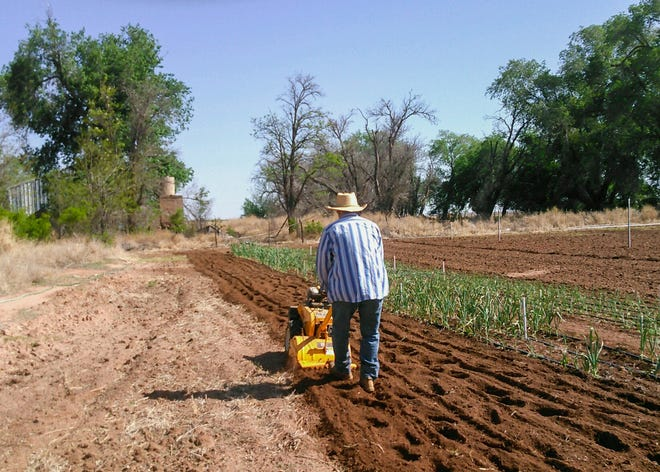 A man works on a farm in Tucumcari, where a new co-op, TableTop Co-op, is working with New Mexico State University's Cooperative Extension Service in Quay County to launch a new land access initiative for beginning farmers.