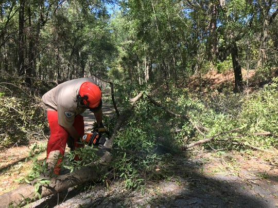 Michael Milgate of the Florida Parks Service takes a chainsaw to a downed tree at the Tallahassee-St. Marks Historic Railroad State Trail.