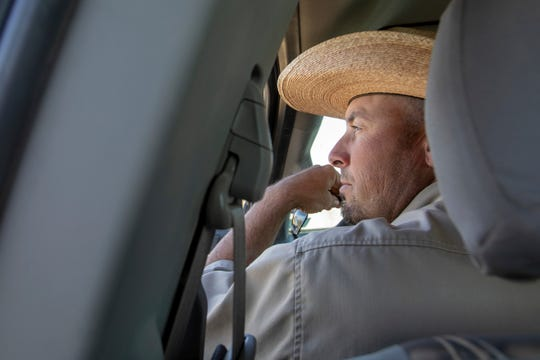 In this Thursday, Sept. 20, 2018. photo, Rich Hansen, the manager at Ogden Bay Waterfowl Management Area, looks out over the grazing cattle at Ogden Bay in Hooper, Utah. The cattle are a relatively new tool in battling phragmites around the Great Salt Lake. The plants are also managed with pesticides, mowing and controlled burning. in Utah. A yearslong battle against an invasive grass has improved hundreds of acres of wetland habitat near the Great Salt Lake, even as lake levels decline.
