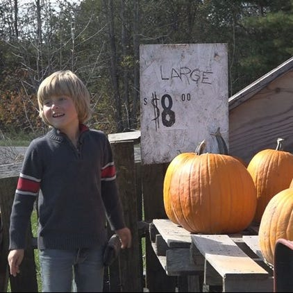 Diabetic boy selling pumpkins to raise money for service dog