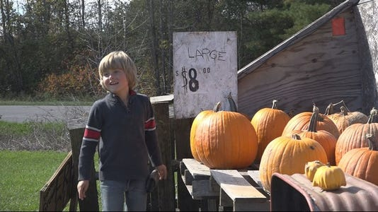 Child selling pumpkins to earn money for service dog