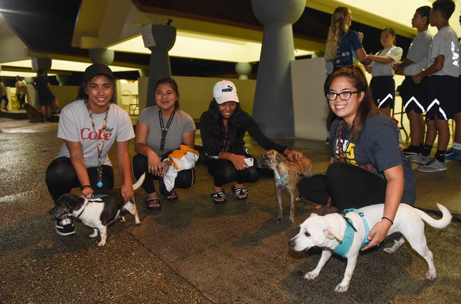 "Volunteers get acquainted with Guam Animals In Need foster dogs during GAIN's second annual 5K and 2K Doggy Dash ""2 Fast 2 Furriest"" at in Hagåtña, Oct. 14, 2018."