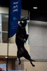 A competitor flies through the air during the Big Air challenge at Saturday's DockDogs World Championship in Knoxville.