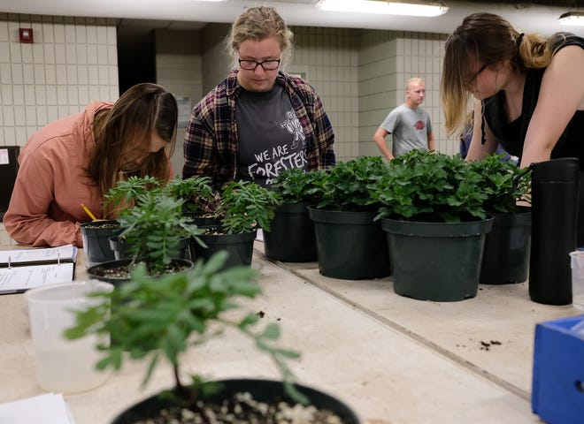 Students in Assistant Professor Kristin Getter's Principles of Horticulture course, work together Friday, Sept. 21, 2018.