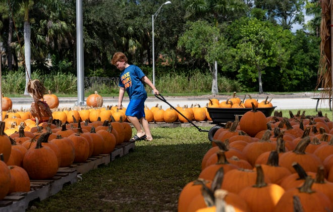 North Naples Church is hosting its annual fundraiser pumpkin patch for the church's youth ministry. The pumpkins in the patch arrived from North Carolina after they survived Hurricane Florence. Aiden Weinmann, 7, a volunteer from The Village School of Naples, lugs a wagon full of pumpkins from the back to the front of the patch for customers on Sunday, Oct. 14, 2018.