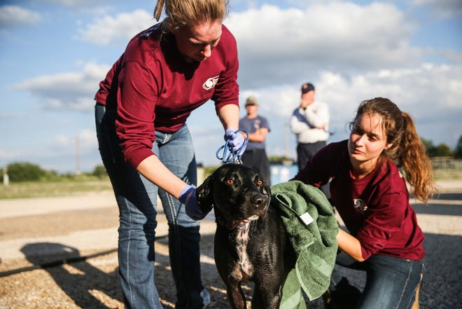 Sarah Kronberger and Rachel Jorgenson with the Veterinary Emergency Team dry off a search dog after a day in the field Saturday, Oct. 13, 2018, in Junction.