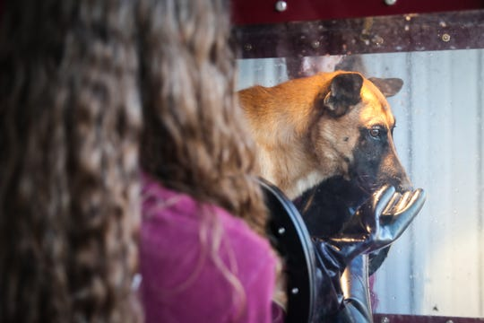 D'Lisa Whaley with the Veterinary Emergency Team washes a search dog after a day in the field Saturday, Oct. 13, 2018, in Junction.