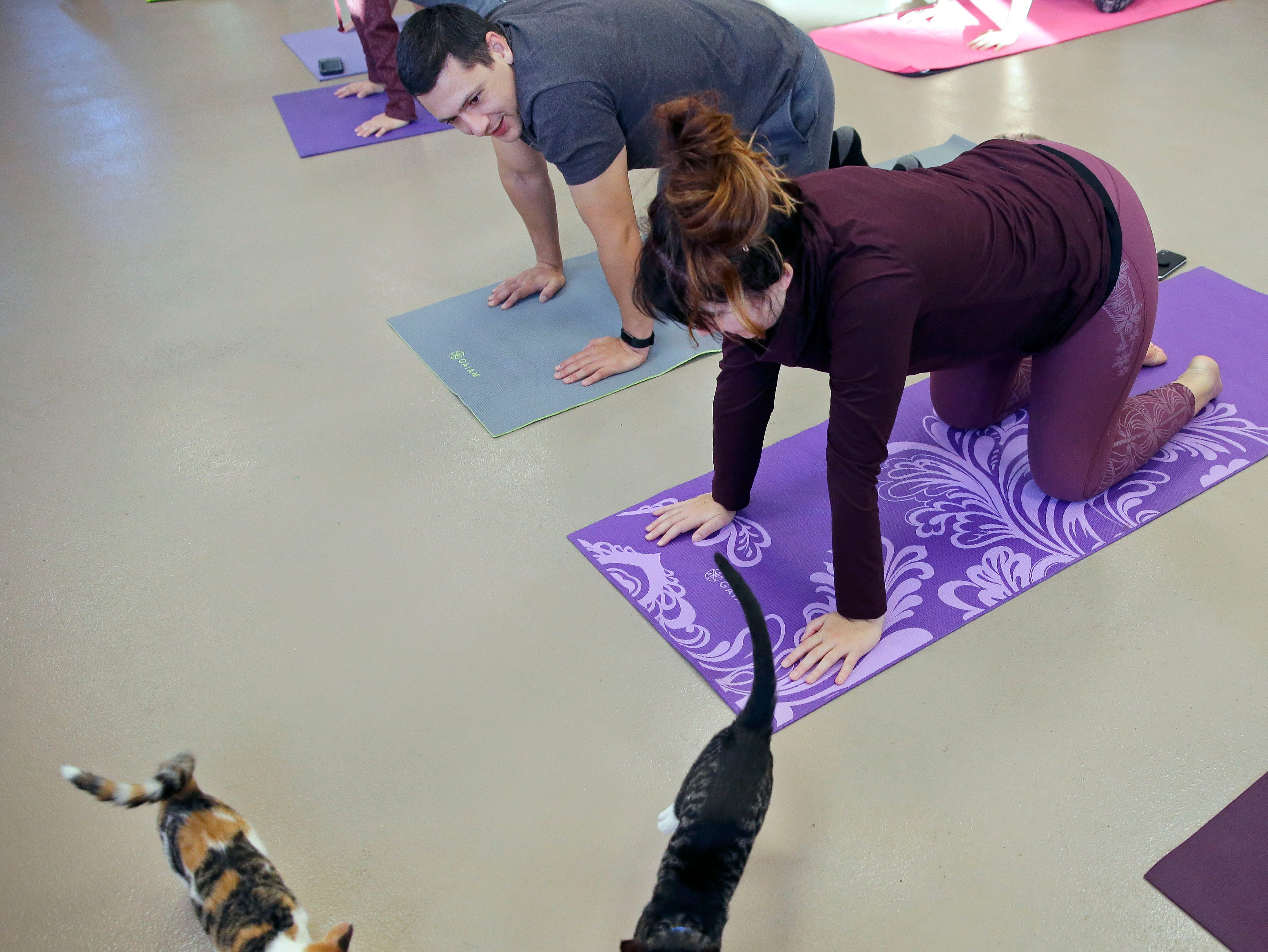 Brice and Lindsey Trickey take part in class while kittens wander by as the Fox Valley Humane Association and Grace Under Fire Yoga bring together adoptable kittens and yoga class for Kitten Yoga on Saturday, Oct. 13, 2018, at the Fox Valley Humane Association in Appleton, Wis.