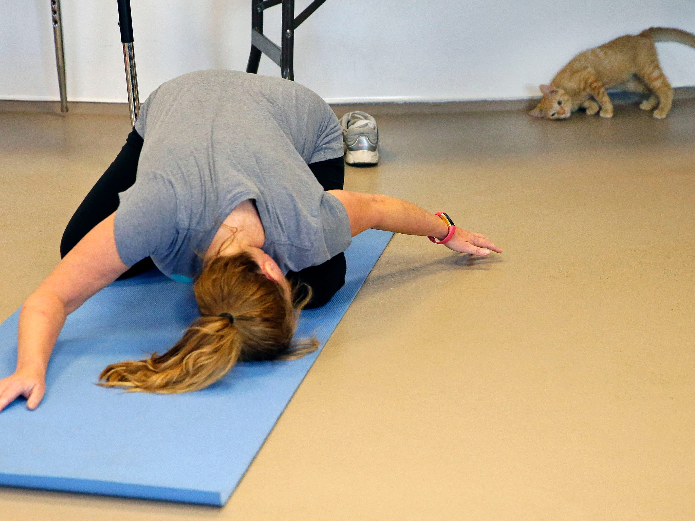Wendy Sontag tries to get the attention of a kitten as the Fox Valley Humane Association and Grace Under Fire Yoga bring together adoptable kittens and yoga class for Kitten Yoga on Saturday, Oct. 13, 2018, at the Fox Valley Humane Association in Appleton, Wis.