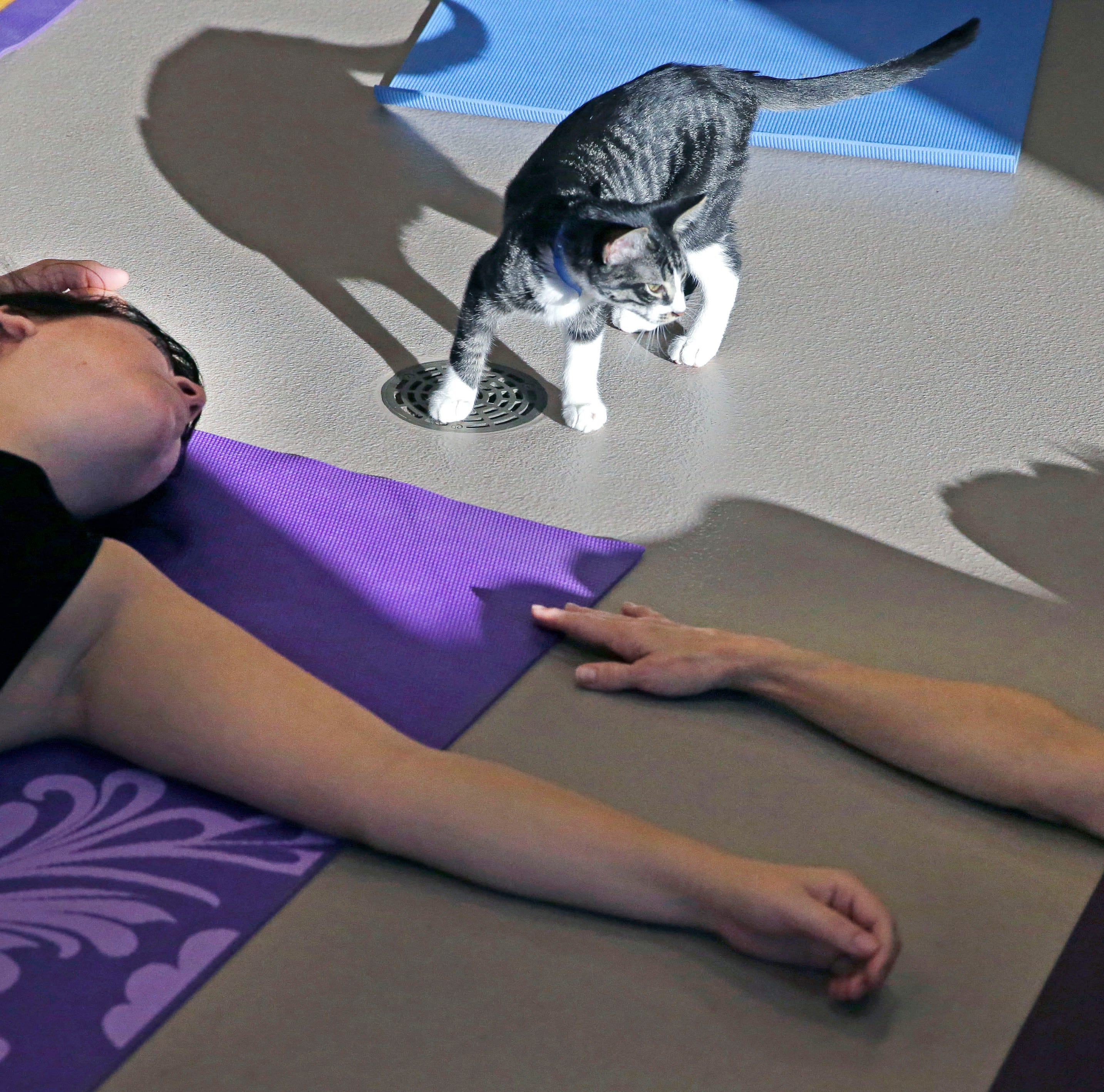 Kittens and yoga? It's a purrrr-fect combination — and it's for a good cause