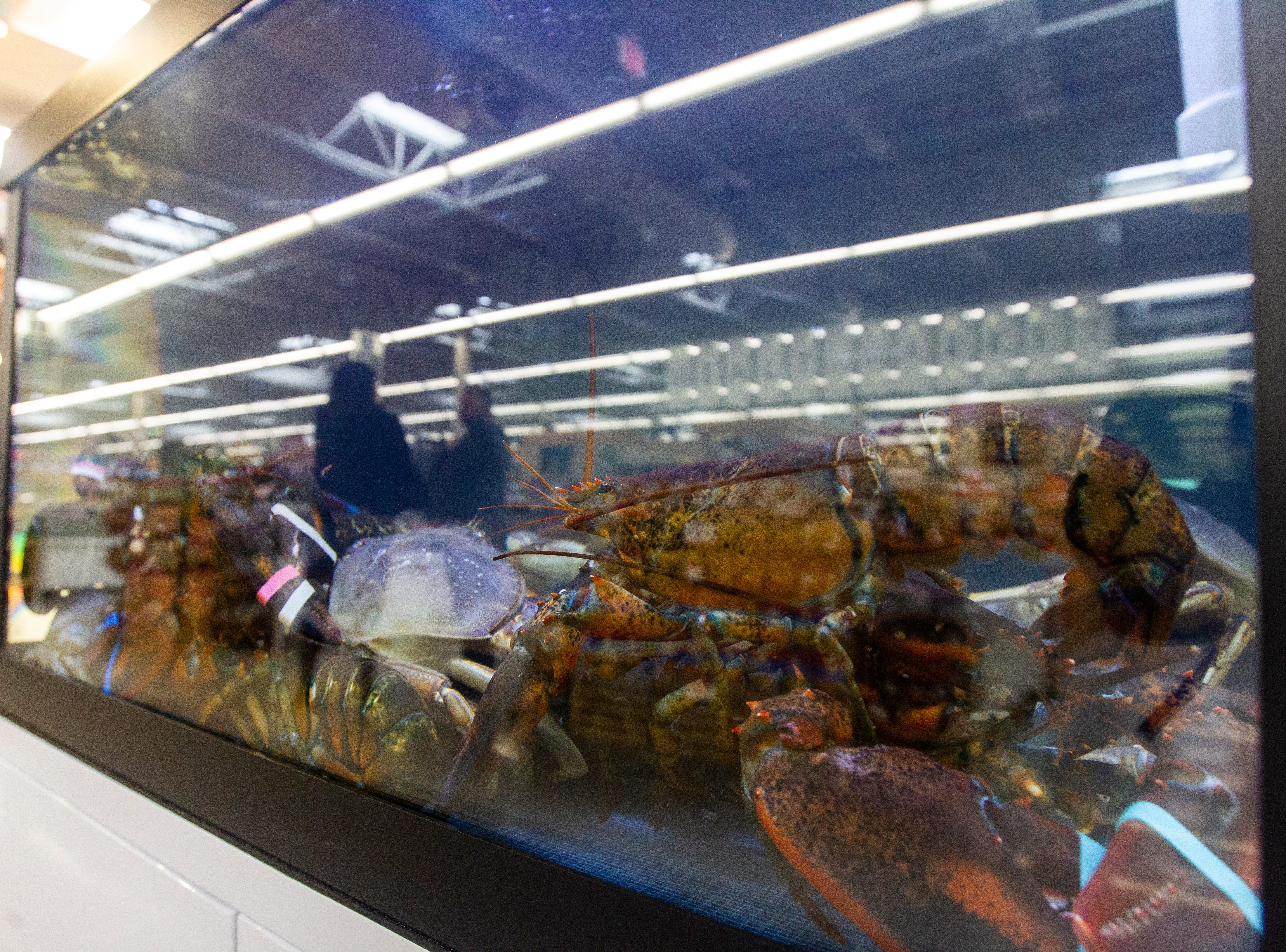 Lobsters sit in a tank at a new Hy-Vee on Monday, Oct. 15, 2018, along Crosspark Road in Coralville, Iowa.