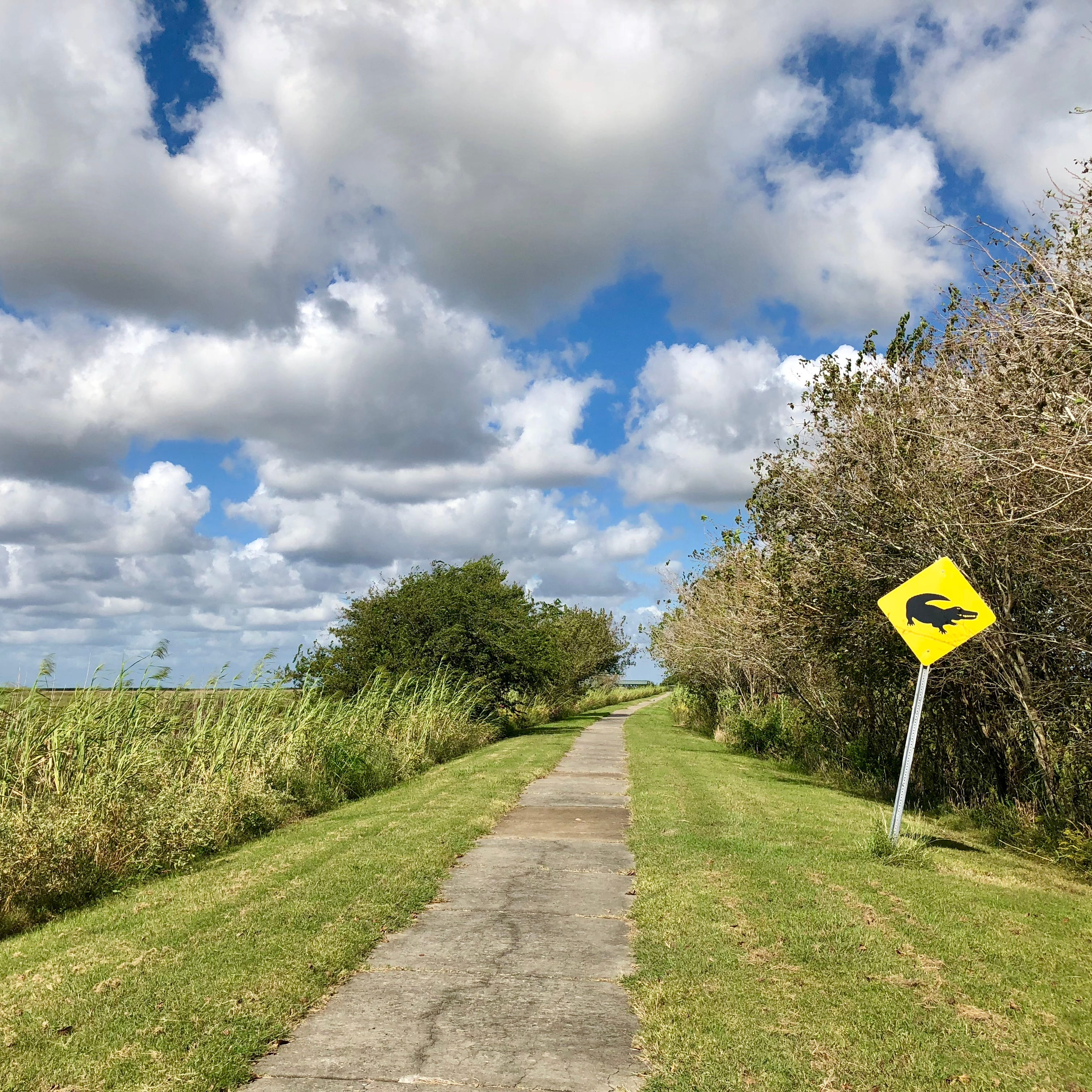 Visitors can experience the Wetlands Walkway on the Creole Nature Trail American Road through Cameron Parish.