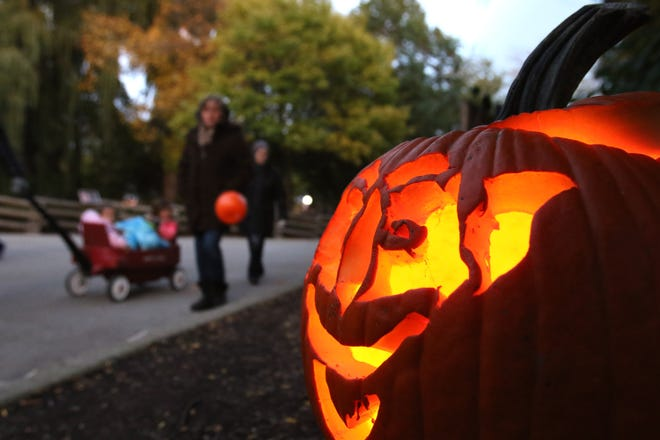 Halloween Celebration 2020 Near Me Halloween 2020: Pumpkin displays, night mazes and more near Milwaukee