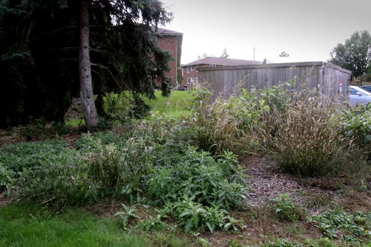 A planting area off an alley in the interior of the Beloit Road Senior Apartments is overgrown with weeds.