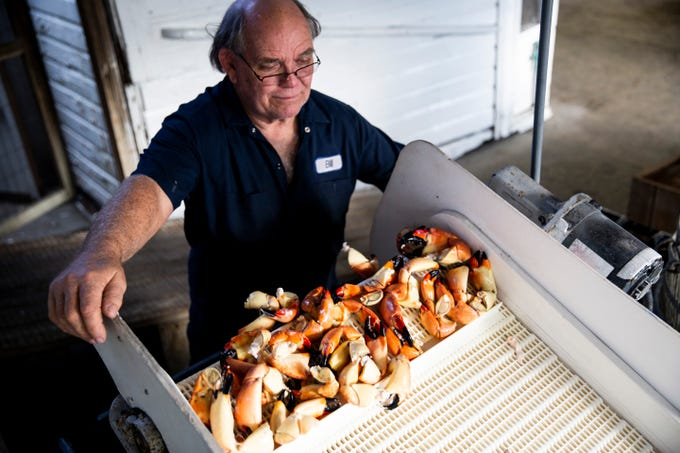 Dock master Bill Winans watches as a batch of stone crab claws drop off the conveyor into a bin on the first day of stone crab season on Monday, Oct. 15, 2018, at Kelly's Fish House Dining Room in Naples. Rick Matthews, the captain of one of the boats that provides Kelly's with stone crabs, said this was the slowest start to a stone crab season he can remember. Matthews collected 30 pounds of crab claws after checking 450 traps.