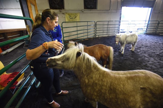 Anna Gassib, Founder and Executive Director, interacts with the miniature horses ( from foreground) Maribel, Teddy and Hank prior to the Equine Therapy at Bergen Equestrian Center in Leonia on 09/30/18.