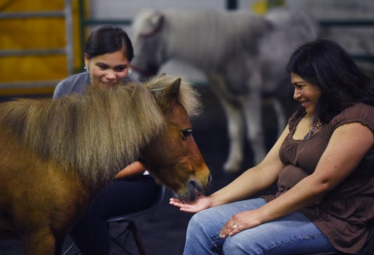 Equine meditation 5