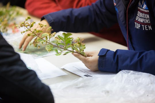 Katherine Arnold, holds a piece of crepe myrtle on Monday, Oct. 15, 2018, as she speaks with a community member about the plant and problems she was having with the plant in her yard. New Mexico State University students participated in the Diagnosing Plant Disorders class outreach, where community members brought in plants, photos of plants or just questions. Students helped answer their questions or solve their problems during the session at the Fabian Garcia Science Center.