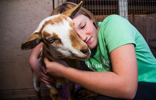 The Wolford family has an urban farm in the backyard of their Gilbert home. It includes crops and chickens, goats and pigs. Lydia Wolford, 13, hugs a goat, Tuesday, October 9, 2018.
