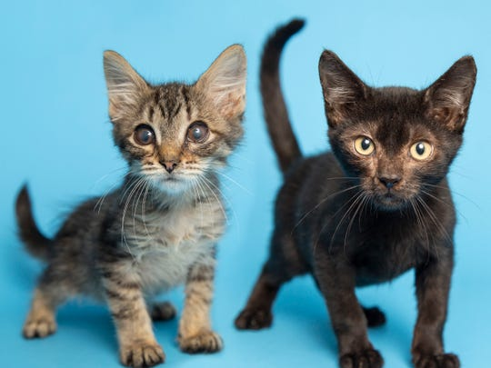 Meet Sterling and Trooper at the Arizona Humane Society's Sunnyslope Campus at 9226 N. 13th Ave. in Phoenix.