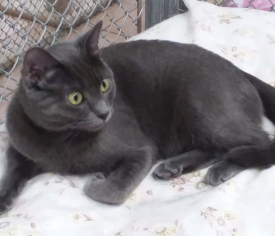 Roswell is at Sun Cities 4 Paws Rescue, 10807 N. 96th Ave., Peoria.  Call 623-773-2246.