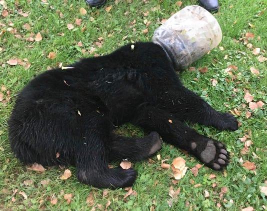 'Buckethead' bear