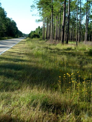 The USDA Forest Service reopened Springhill Motorcycle Trail and Trout Pond Recreation Area on the Apalachicola National Forest on Thursday, May 21.