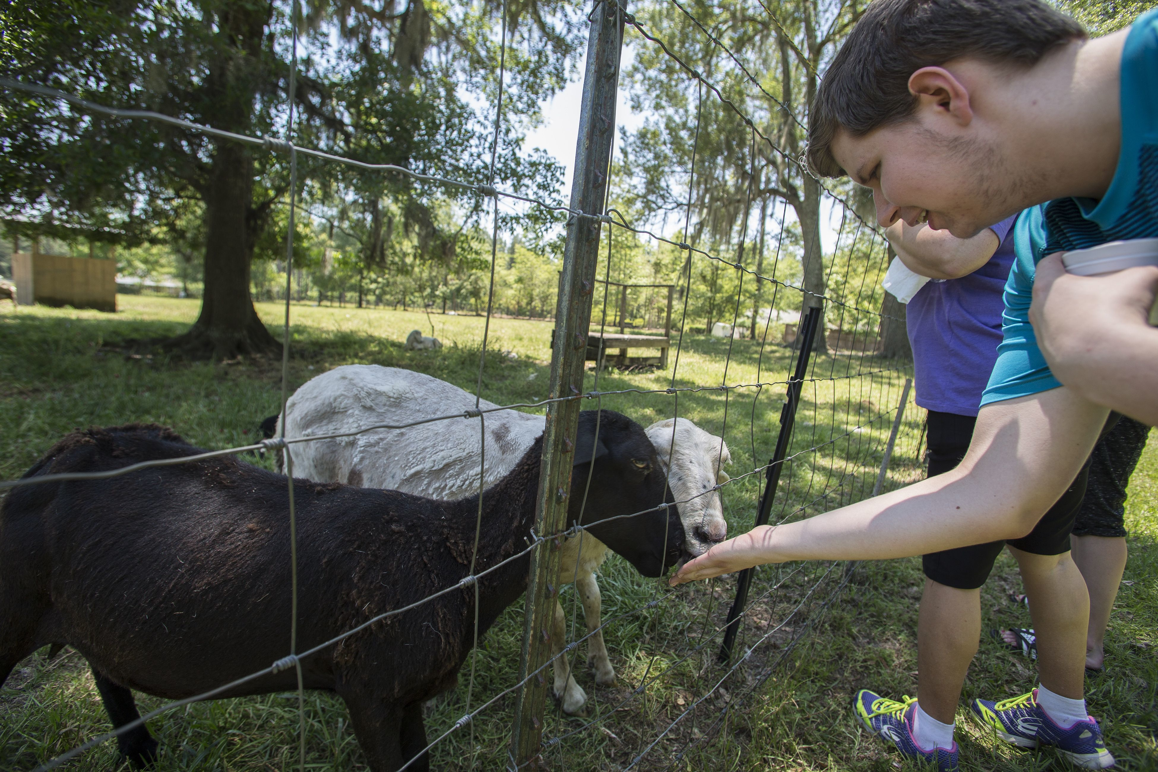 Visitors check out the katahdin sheep at Golden Acres Farm.