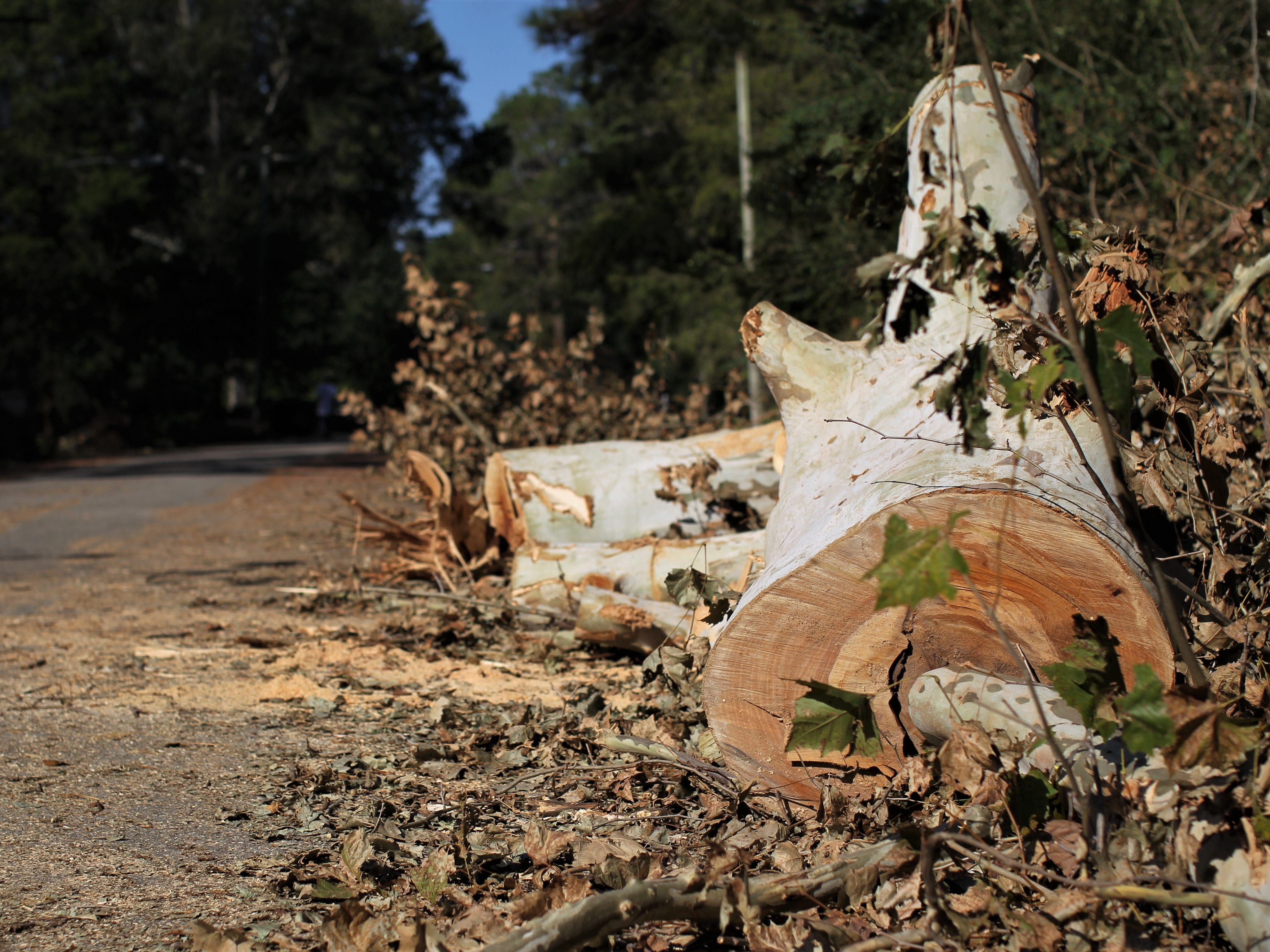 Damage in Tallahassee in Indian Head Acres following Hurricane Michael.