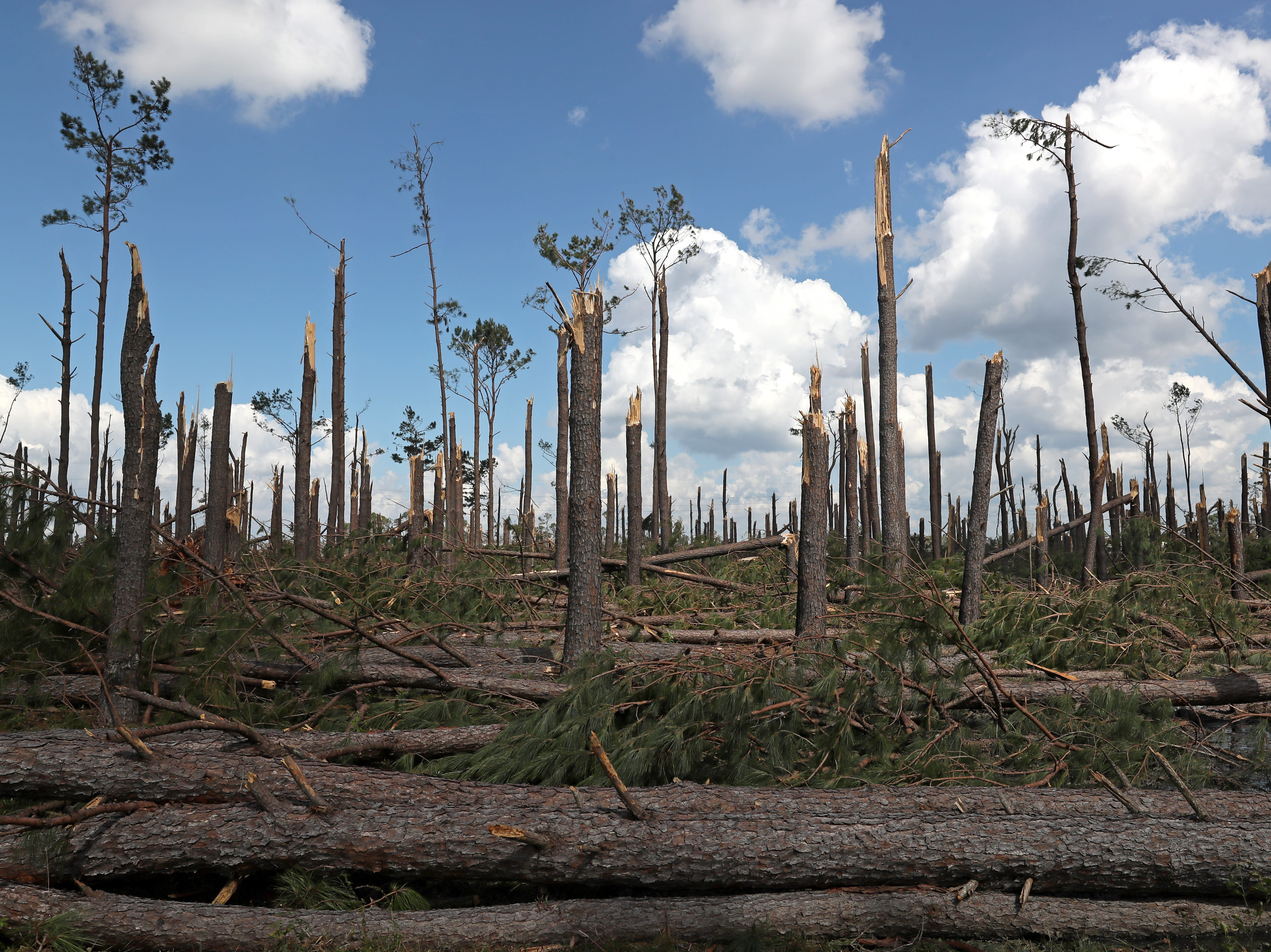 Trees are left broken in half on Highway 90 between Chattahoochee and Sneads along Hurricane Michael's path on Monday, Oct. 15, 2018.